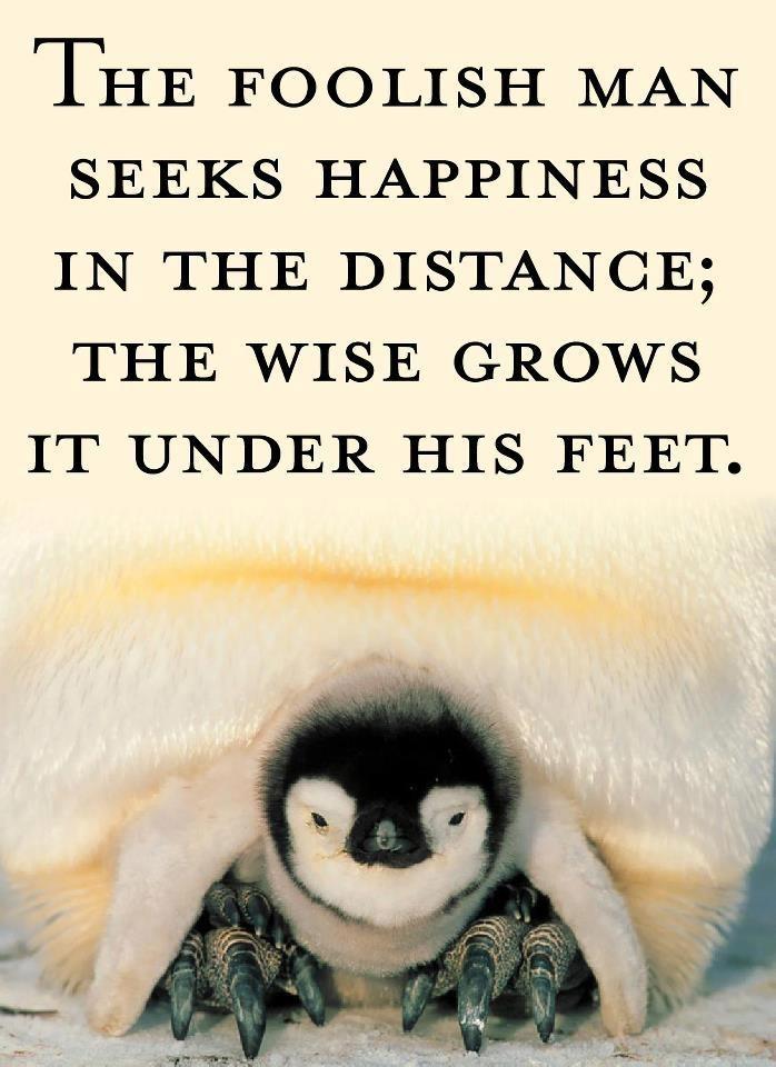 Feet: Inspiratie Inspiration, Walking Hik Quotes, Foot Boards, Random Resonance, Wise Words, Evans Foot