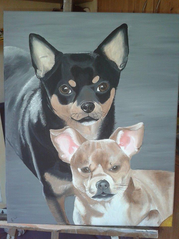 portret chihuahua/dwergpincher
