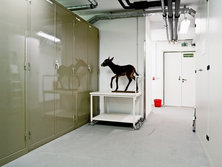 #SkeletonsInTheCloset #animals #arts #photography