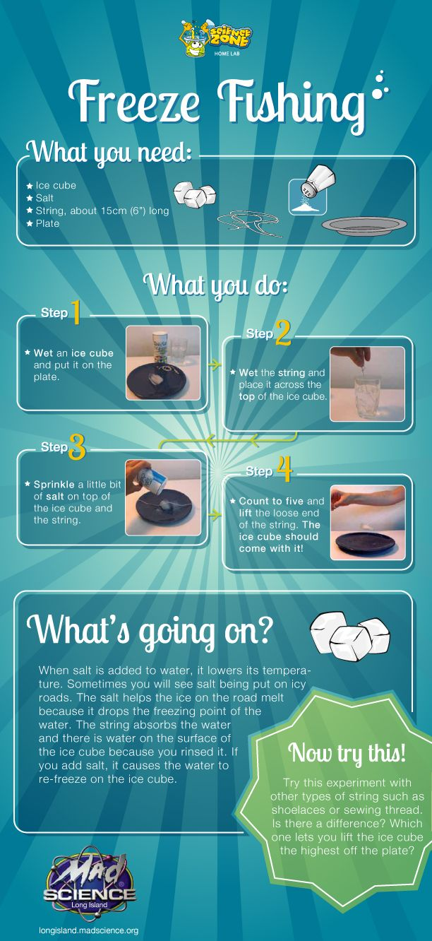 89 best science project images on pinterest school for Fishing science fair projects