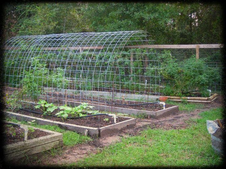 Vegetable garden trellis ideas space smart trellis arch for Vegetable garden trellis designs