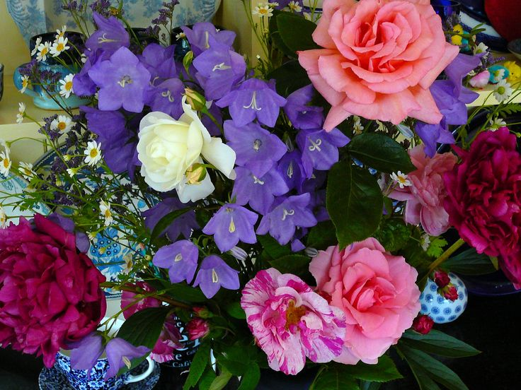 Flowers from the garden June 2014