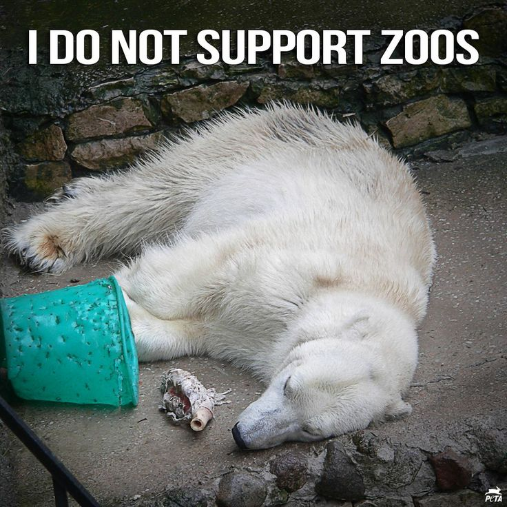 can the existence of zoos be The truth is that zoos exist primarily for profit one of the biggest draw cards for zoos is baby animals one of the biggest draw cards for zoos is baby animals babies will often be bred even when there isn't enough room to keep them, inevitably resulting in surplus animals in zoos.