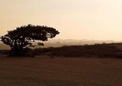 Einsamer Baum in Israel