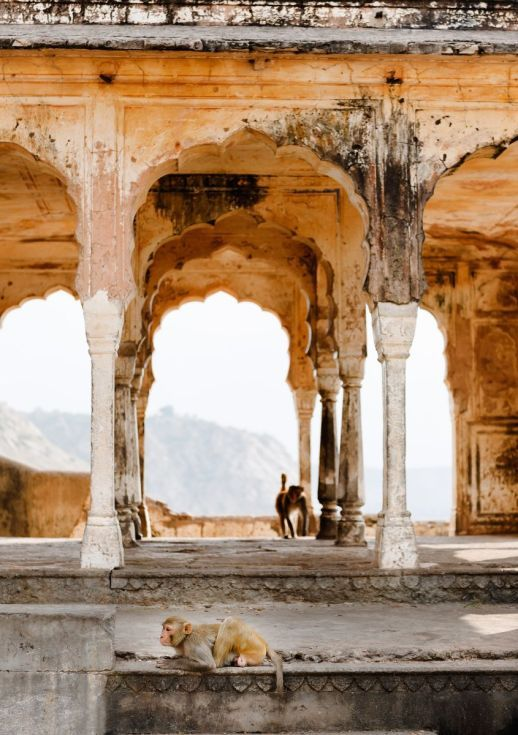 ARTFINDER: Monkeys in Temple Ruin, Jaipur (42x59cm) by Tom Hanslien - Two monkeys in a temple ruin we passed on our way up to Galta and Surya Mandir (The Monkey Temple and the Temple Of The Sun God) in Jaipur, Rajastahn, India....
