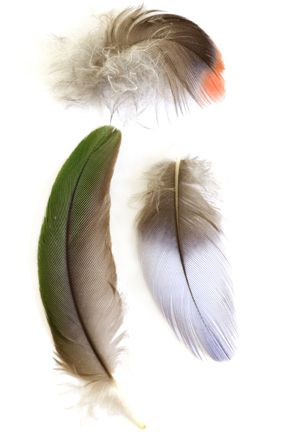 Feathers - By Alycia Rowe