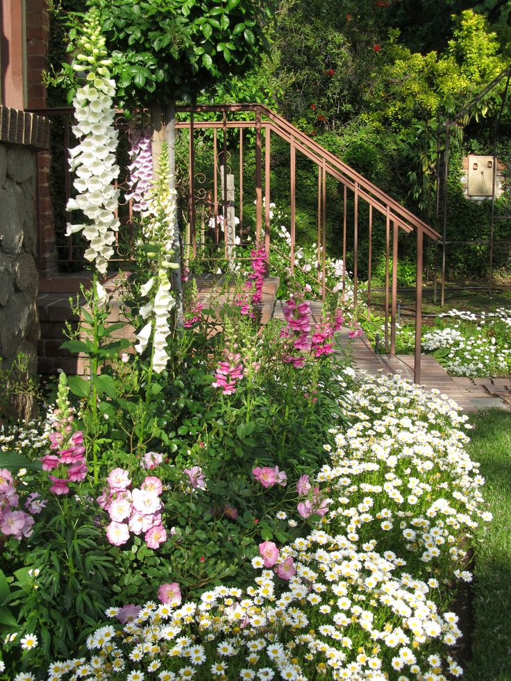 shasta daisy border for flower bed of foxglove snapdragon and - Front Yard Cottage Garden Ideas