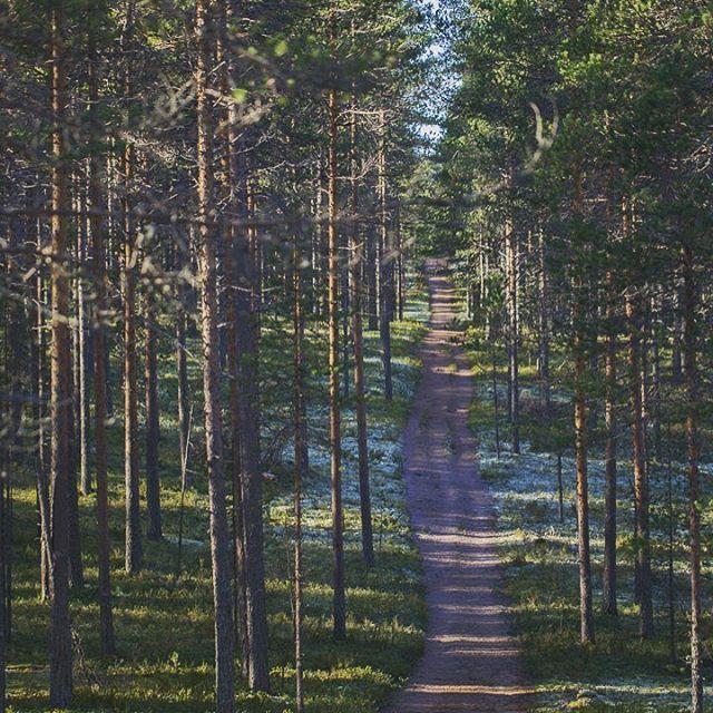 Metsäpolkua kulkijalle #patikointi #sauvakävely #pyöräily #maastopyöräily #polkujuoksu #metsäpolku #rokua #luontolähellä #visitrokua #rokuahealthspa #rokuankansallispuisto #suomiretki
