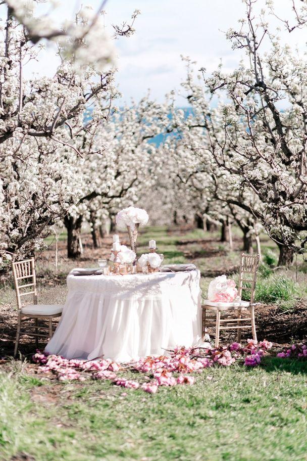 pink horse cherry blossom wedding (30)