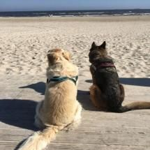 Hundeurlaub Dein Urlaub mit Hund in Ferienwohnung oder