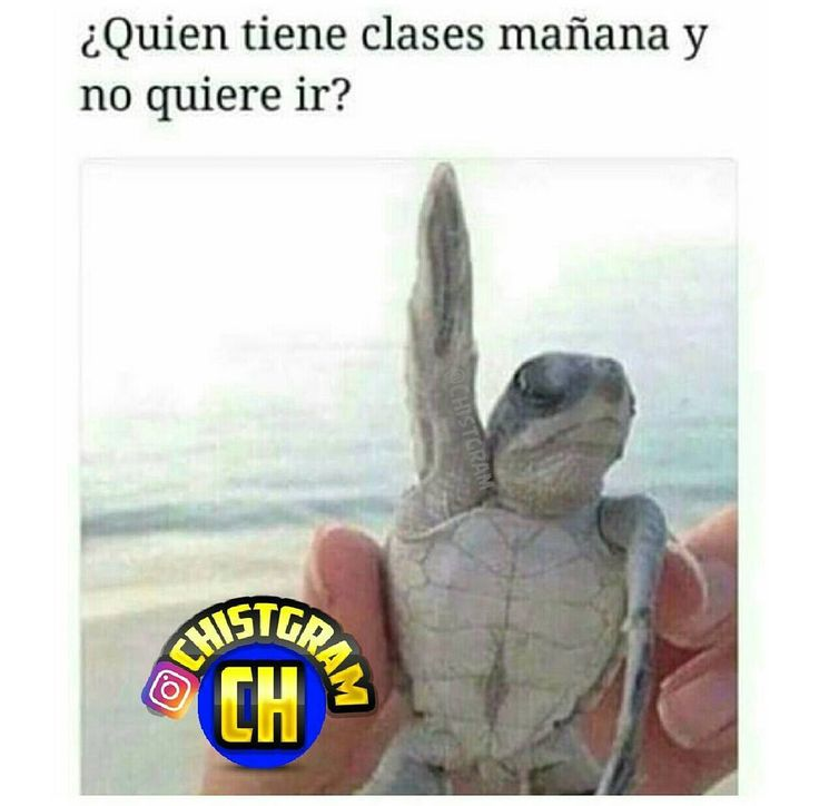 "368 Likes, 1 Comments - Cuenta Oficial Chistgram™ (@chistgram) on Instagram: ""SÍGUENOS @CHISTGRAM ACTIVA LAS NOTIFICACIONES!!  ^ ^ ^ ^ #moriderisa…"""
