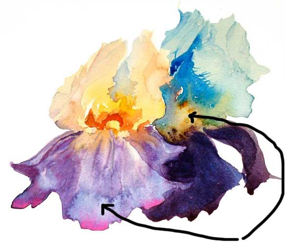 Art Instruction Blog: Watercolor Painting Techniques - Watercolor Blooms - Making the Best of the Bloom by Mary Ann Boysen
