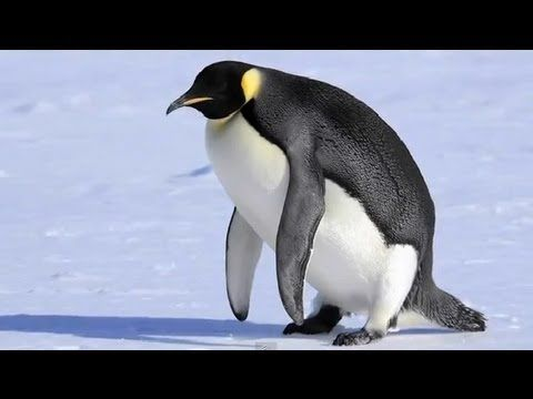 5 Unusual Facts About Penguins (could also be used as a model for student fact/opinion projects)