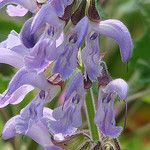 Ectopic expression of human acidic fibroblast growth factor 1 in the medicinal plant, Salvia miltiorrhiza, accelerates the healing of burn wounds. Read more: https://www.worldnewsmd.com/news/Holistic.aspx #MedicalNews #MedicalResearch #BurnWounds