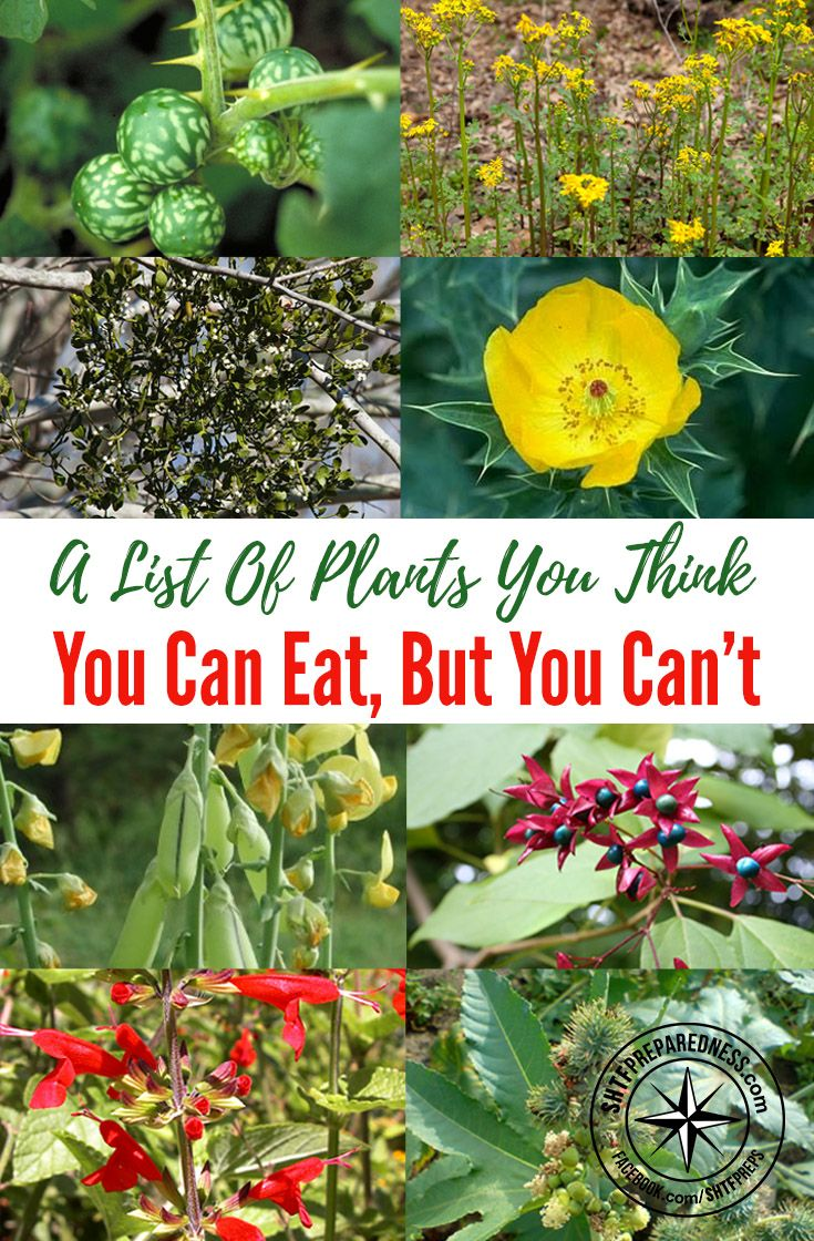 A List Of Plants You Think You Can Eat, But You Can't — If you into survival or prepping knowing what wild edibles you can eat is very important because they may be all you have to eat and provide your body nourishment for days, weeks and god forbid, months.