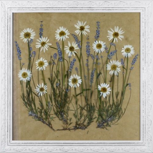 Pressed Flower Craft Ideas | Framed Pressed Flowers | Craft Ideas