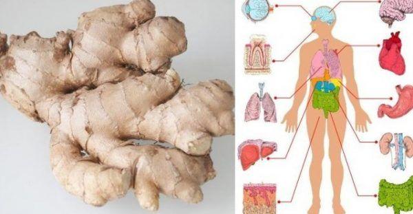 Η πιπερόριζα είναι ένα συστατικό που χρησιμοποιείται στην κουζίνα. Τον τελευταίο καιρό άρχισε να χρησιμοποιείται και σε καταστάσεις υγείας, όπως ναυτία, πε