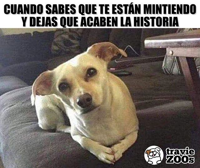 Andale Sigue Con Tus Mentirotas Dog Perro Mentiras Enojo Animales Memes De Perros Chistosos Memes Perros Chistes De Perros