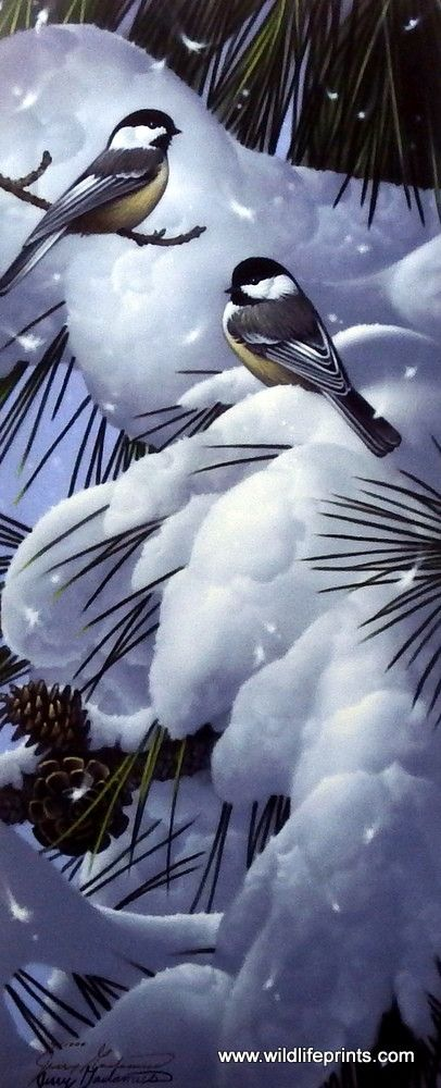 A pair of chickadees blend into the snow covered pine tree in this Jerry Gadamus…