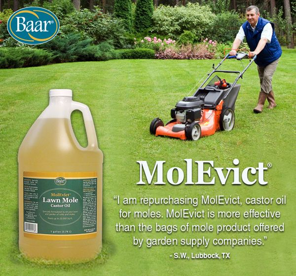 MolEvict Is More Effective Than The Bags Of Mole Product Offered By Garden  Supply Companies.