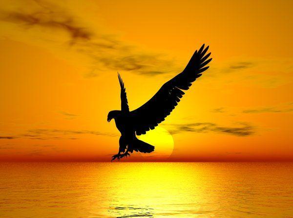 zeus symbol eagle - photo #13