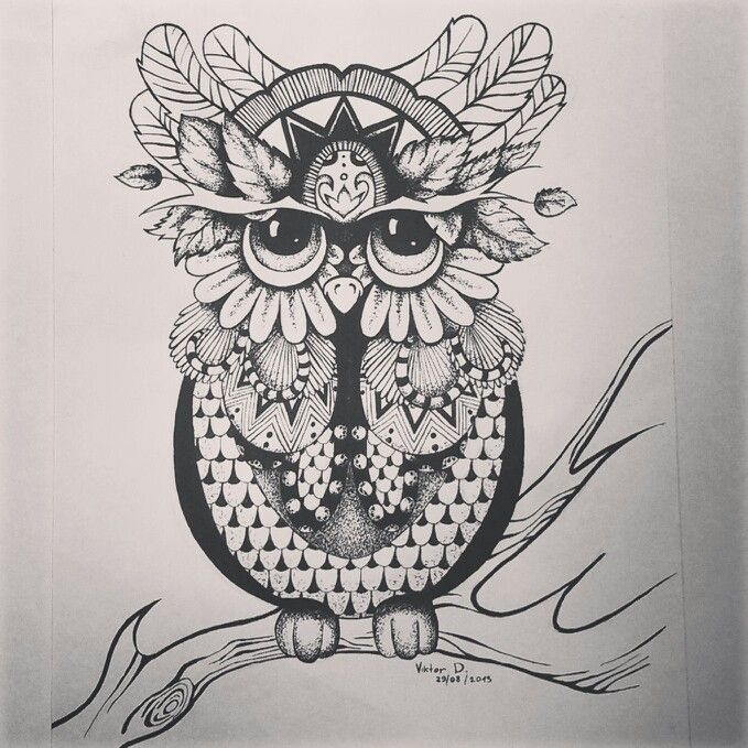 Owl is a beautiful creatures