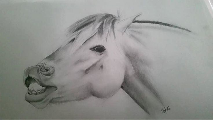 Fjordhorse, fjording, fjordhest, horse, hest