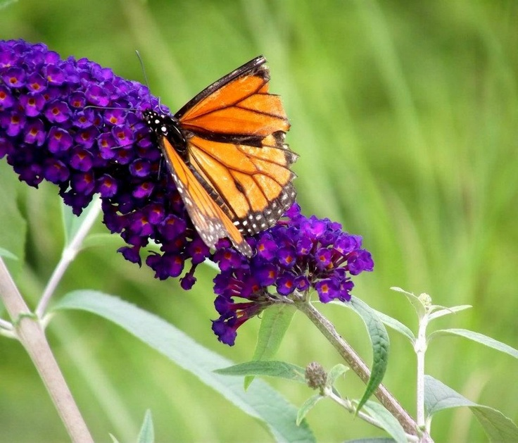 47 best GARDEN: INSECTS images on Pinterest   Garden insects ...