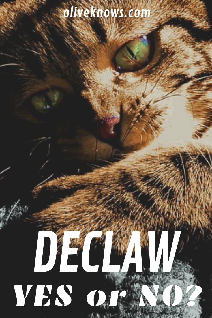 Why You Shouldn T Declaw Your Cat Oliveknows Cat Safety Cats Cute Cats