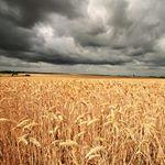 Les champs de Normandie au printemps: de magnifiques couleurs sur le GR22.