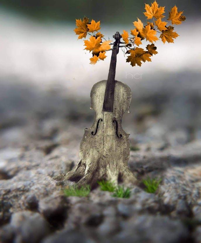 Foto De Virgaba Google Fotos Miniature Photography Cute Photography Cool Pictures For Wallpaper