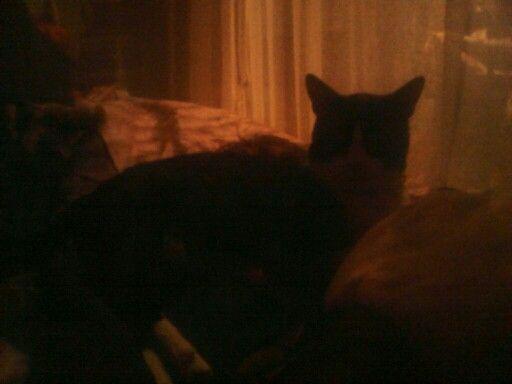 My lovely pet niki
