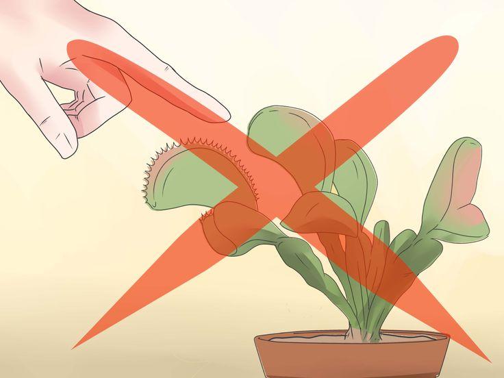 Puede que la venus atrapamoscas sea unas de las plantas más peculiares que existen. Son difíciles de ignorar por sus 'mandíbulas dentadas' y su tendencia a capturar presas vivas. Estas plantas resultan un atractivo tremendo para cualquier j...