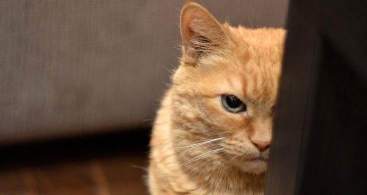 kattenfluisteraar??