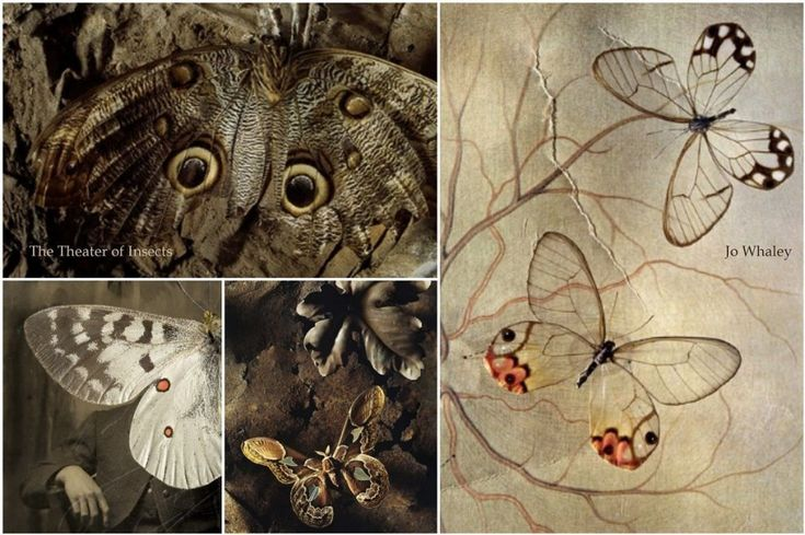 Jo Whaley – 'The Theater of Insects'