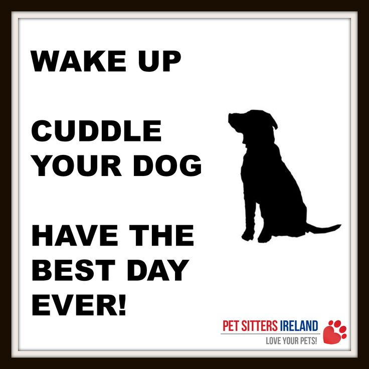 Cuddle Up Quotes: 11 Best Inspirational Quotes From Pet Sitters Ireland