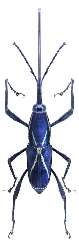 The Lesser of Two Weevils?