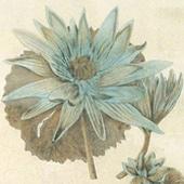 Lyndi Sales Blue Florilegium - Trowbridge Gallery