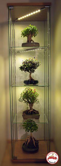 "Take pepper plants and grow them like bonsai trees. ""Bonchi""...http://www.fatalii.net/Bonsai_Chiles_Bonchi"