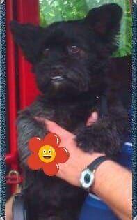 Hunde Foto: Ute und Samy - Mein stincker Hier Dein Bild hochladen: http://ichliebehunde.com/hund-des-tages  #hund #hunde #hundebild #hundebilder #dog #dogs #dogfun  #dogpic #dogpictures