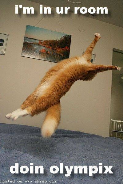 olympic catFunny Kitty, Doin Olympix, Laugh, Funny Cat, Pets, Crazy Cat, Humor, Funny Animal, Olympics Cat