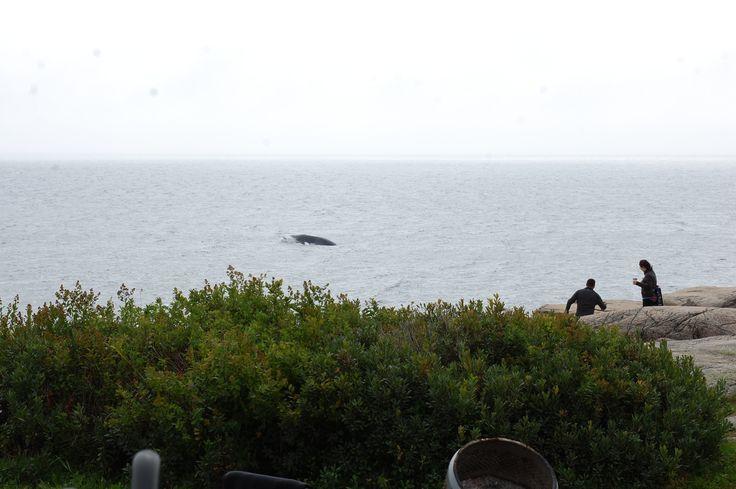 Voir des baleines au Paradis marin , les fesses au chaud dans le kayak