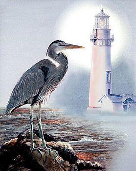 Gina Femrite ışığın daire mavi balıkçıl