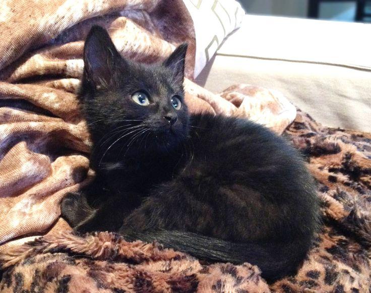 adopter un chaton ou un chat adulte ?