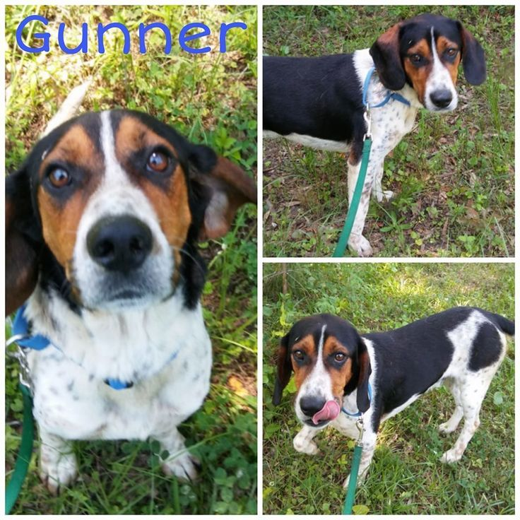 Adopt Gunner On Petfinder Paws Rescue Dog Adoption Basset Hound Mix