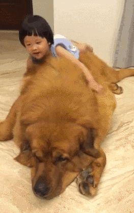 Un tierno gigante y su mejor amigo: | 25 GIFs de animales que enternecerán tu frío y muerto corazón