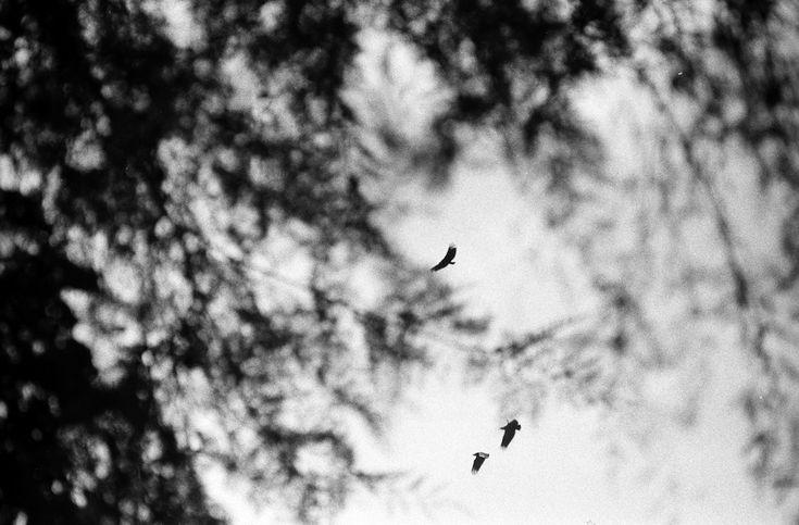 colonia eagles
