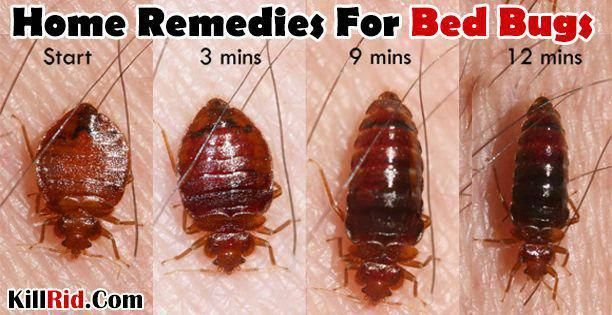 In This Article We Will Suggest You Some Of The Best Home Remedies