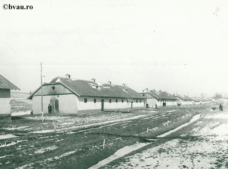"""Vechile grajduri de la Cooperativa Agricolă de Producție 11 Iunie Pechea, anul 1964, Galati, Romania. Imagine din colecțiile Bibliotecii Județene """"V.A. Urechia"""" Galați."""