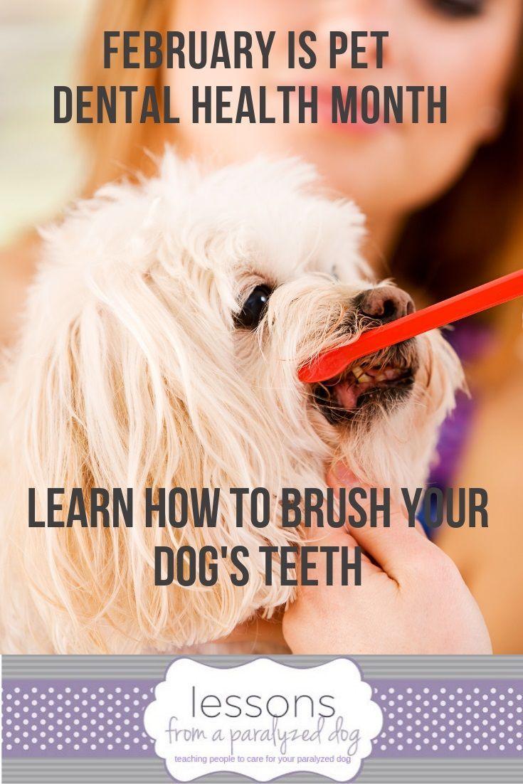 National Pet Dental Health Month Dental Health Dental Health